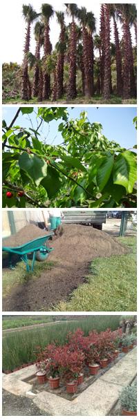 Venta de materiales de jardiner a y mantenimiento de for Productos jardineria barcelona